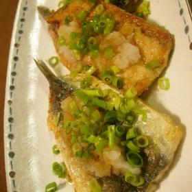 sardine-oroshi-ponzu